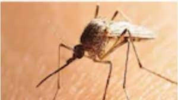 घर-सोसाइटी में मच्छर मिले तो कटेगा हजारों रुपये का चालान, जानिए नियम