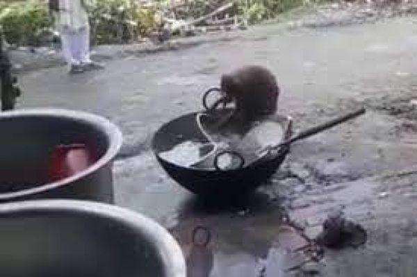 ...जब होटल के बाहर बंदर साफ करने लगा बर्तन, काम खत्म करने के बाद खाया खाना, देखें Video
