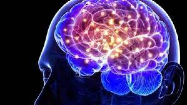 3000 साल पहले क्यों छोटा हो गया था मानव मस्तिष्क, शोध ने बताया क्यों