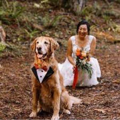 कुत्ते के साथ दुल्हन ने कराया अनोखा फोटोशूट, तस्वीरें देख दीवाने हुए लोग