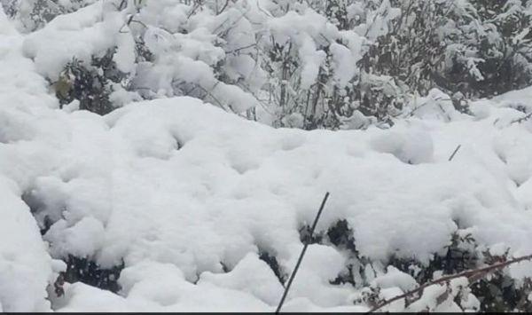 हिमाचल प्रदेश: किन्नौर में भारी बर्फबारी के चलते 3 पर्वतारोहियों की मौत, 10 सुरक्षित निकाले गए