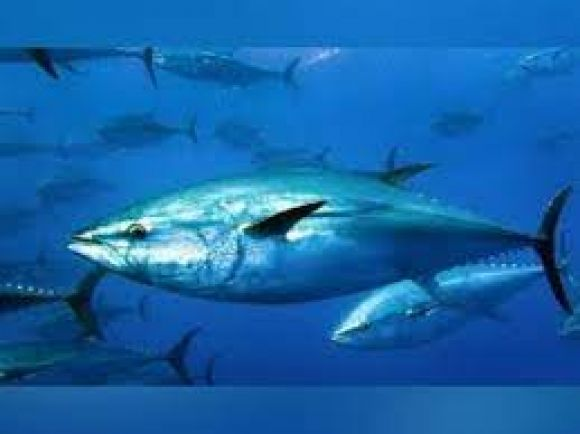 दुनिया की सबसे महंगी मछली की करोड़ों में है कीमत! शिकार करने पर मिल सकती है सजा, आपको पता है नाम?