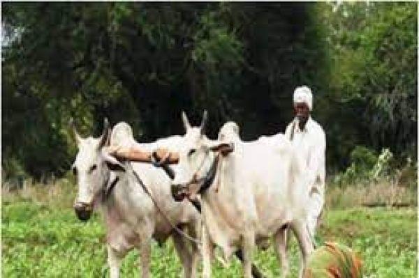 किसानों के लिए जरूरी खबर, 10वीं किस्त के लिए चार दिन के भीतर जमा करें ये डाक्युमेंट, खाते में आएंगे ₹4000