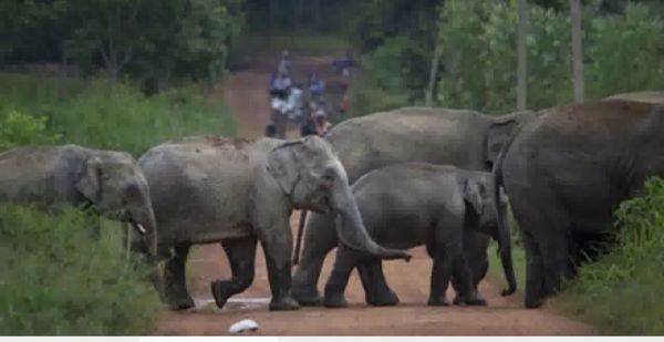 हाथी के हमले से युवक गंभीर, बिलासपुर भेजा