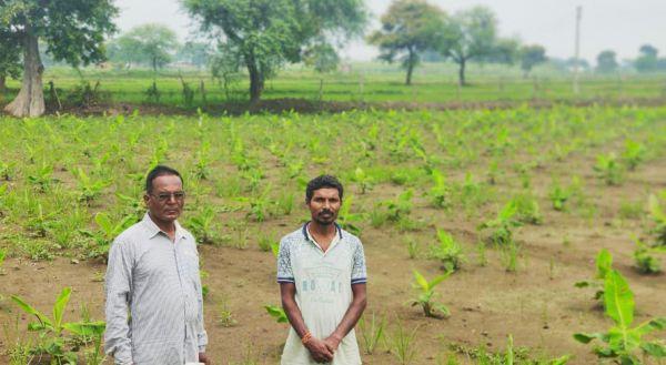 जिले में बढ़ा लघु धान्य फसल एवं दलहन-तिलहन का रकबा