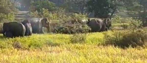 उरकेला के जंगल में पहुंचे हाथी